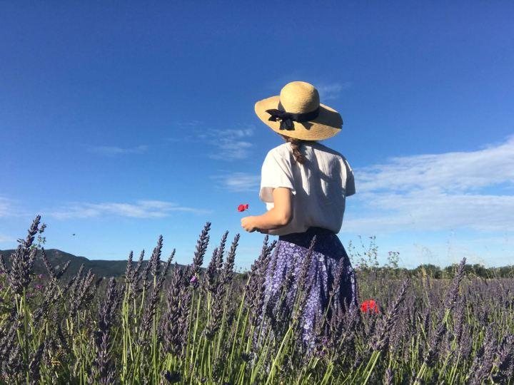 Où voir les plus beaux champs de lavande en Provence?
